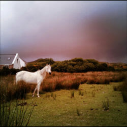 Achill Island horse Ireland Karen Schulman Photo Tour